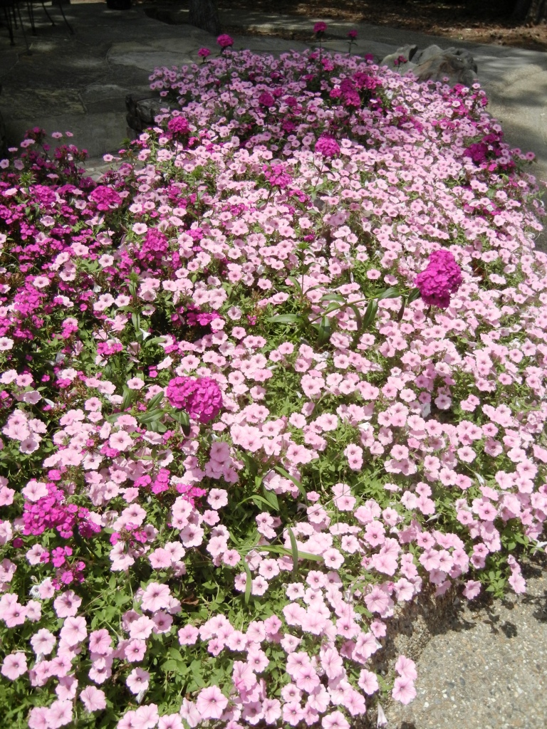 phlox senior personals List of top websites like fitnessprofessionalonline  trays, specimen, tender, wildflowers, meadow, succulents, thrillers, dianthus, phlox  personals and the.