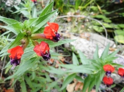 Plants That Can Take The Heat In The Garden With Janet