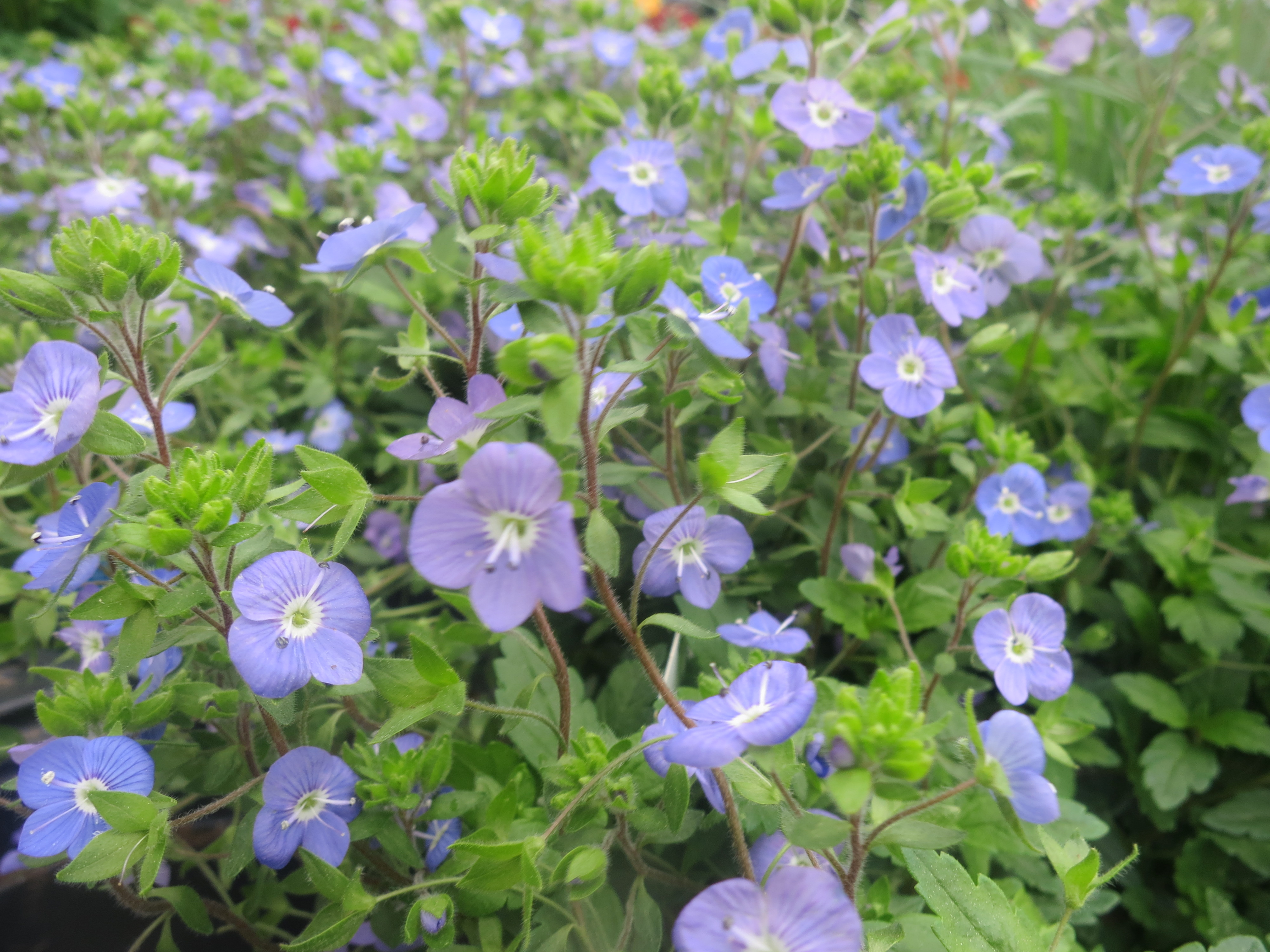 Mystery plants both old and new in the garden with - Vegetable garden what to plant in april ...