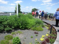 clinton library rooftop garden.may1411