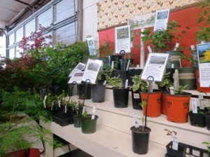 pope county plant sale06
