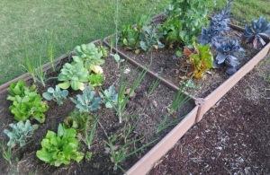 veg garden may1.