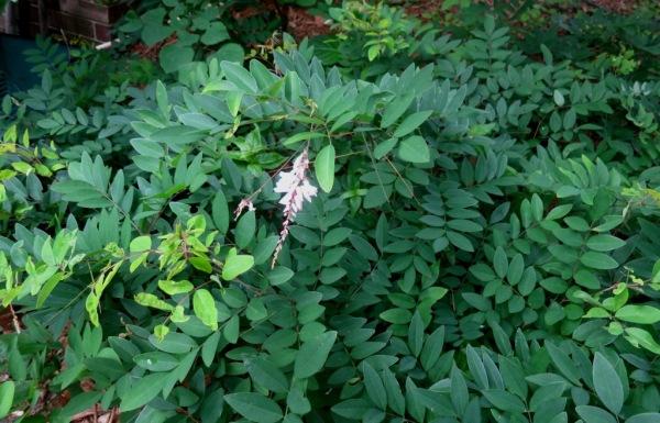mystery plants june 16.1