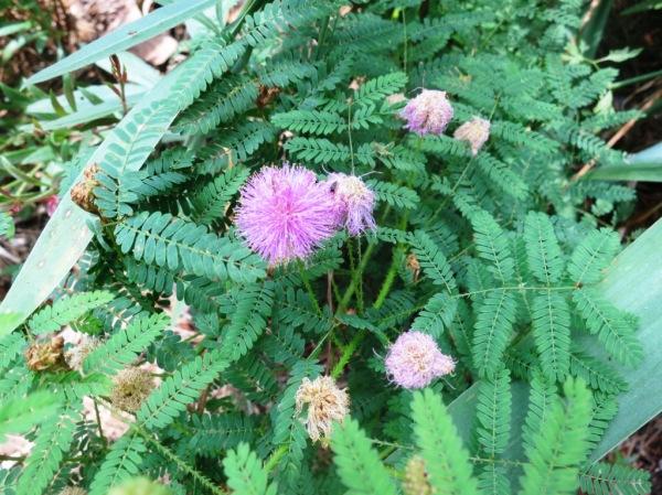 mystery plants june 16.3