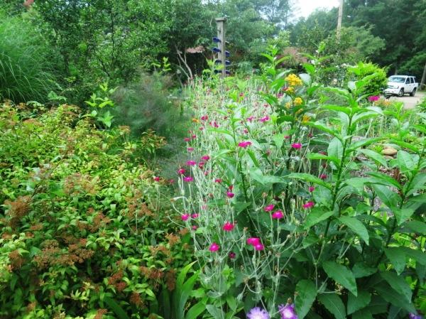 saline county gardens june.14.43