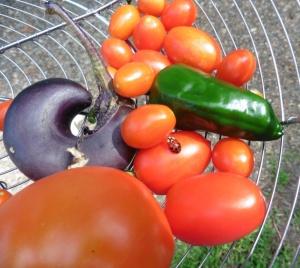 ladybug and veggies.july 2014.
