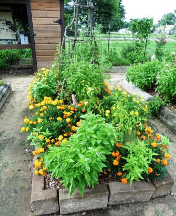 nashville demonstration organic garden.july15.02
