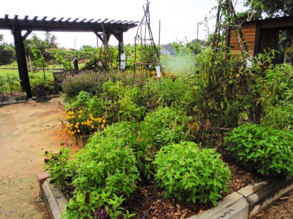 nashville demonstration organic garden.july15.03