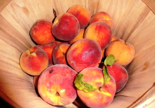 peaches howard co.