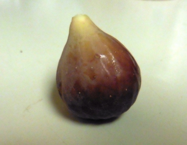 fig first one.aug29.14