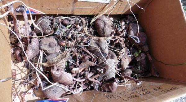 mushrooms aug31.14