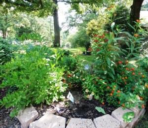 my garden aug3.14.