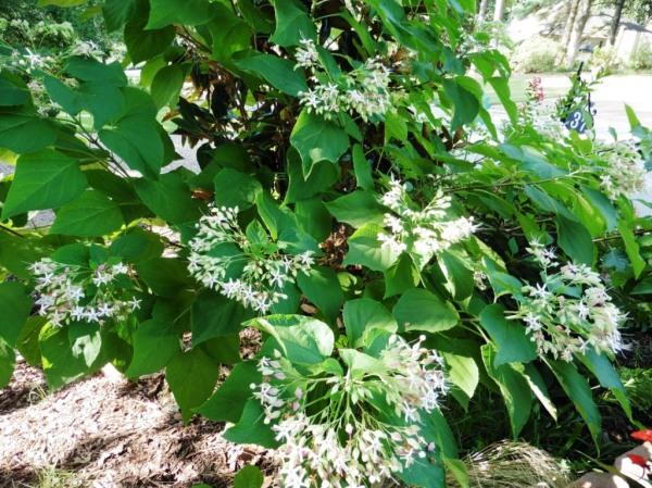 mystery plant a.aug18.04