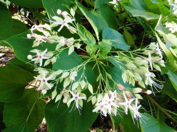 mystery plant a.aug18.05