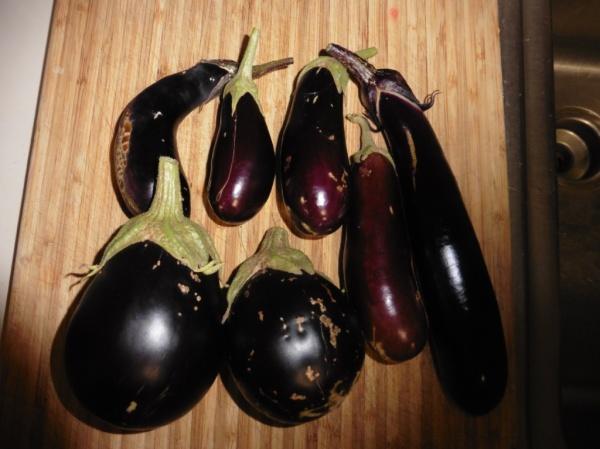 eggplant sept 16.14.1
