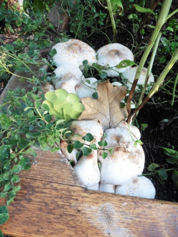 mushrooms sept3.14