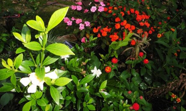my garden sept17.14.1