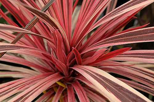 mystery plant a.sep1.14