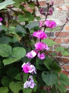 mystery plant c sept.1.14.
