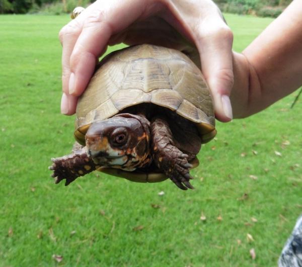 turtle garvan tv sept2.14.1