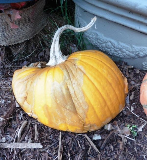 pumpkin melting oct4.14