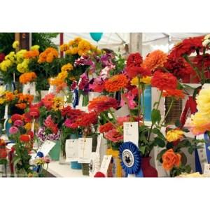 fair judging flowers