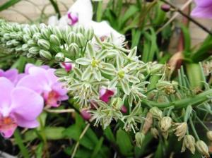 mystery plant a.feb9.15 (2)