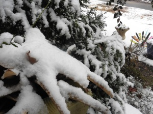 snow february25.15.2