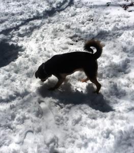 snow mar 5.15 (1)
