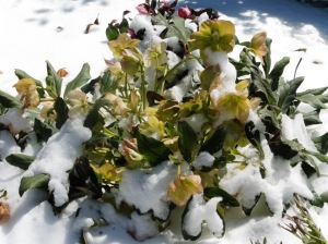 snow mar 5.15 (27)