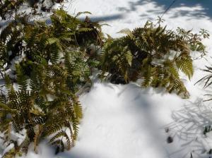 snow mar 5.15 (28)