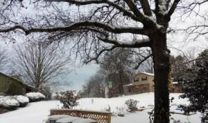 snow mar 5.15 (3)