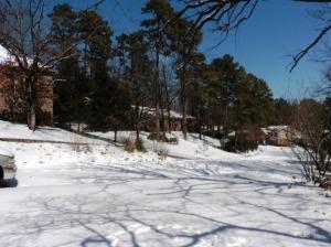 snow mar 5.15 (31)