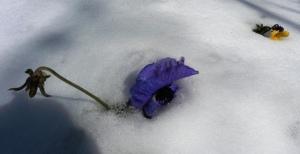 snow mar 5.15 (32)