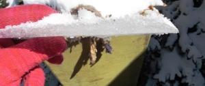 snow mar 5.15 (36)