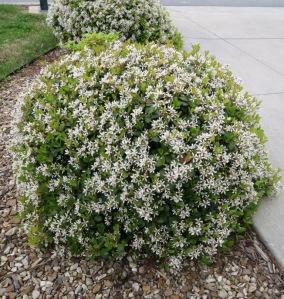 mystery plant c apr20.152