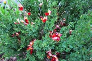 mystery plant c apr27.15.