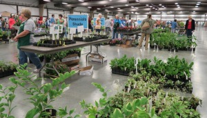 faulkner county mg plant sale may9 (11)