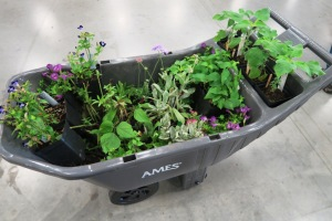 faulkner county mg plant sale may9 (15)