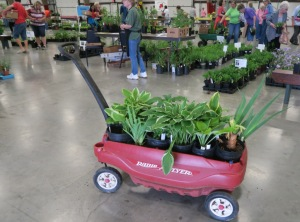 faulkner county mg plant sale may9 (20)