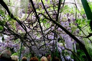 monet's garden.06