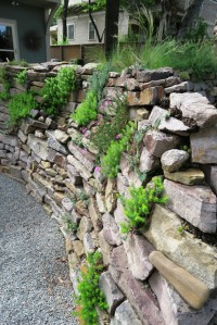 rock wall garden may30.15