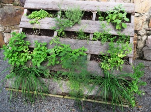 vertical herb garden may30.15