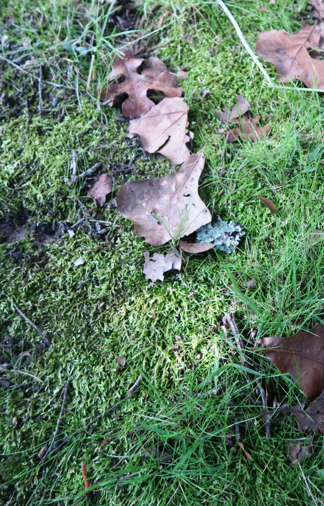 how to kill moss not grass