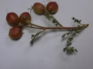 mystery plant b june15.15
