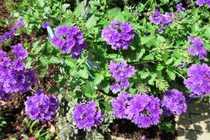 mystery plant c.june8.152