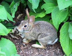 rabbit blue springs (1)