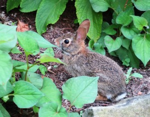 rabbit blue springs (3)
