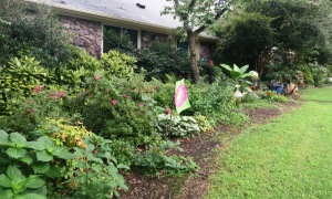 front garden july.15 (1)