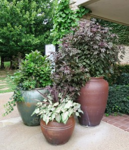 ft worth botanical gardens.july15 (10)